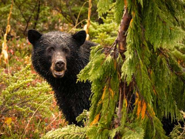 OntheWay-Bear